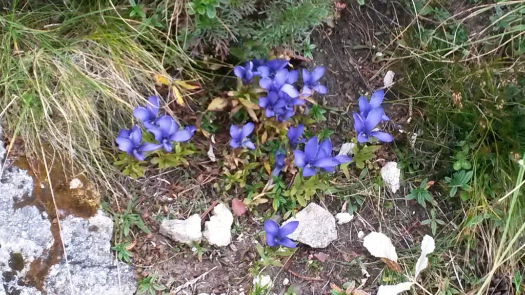 cvetje z gora